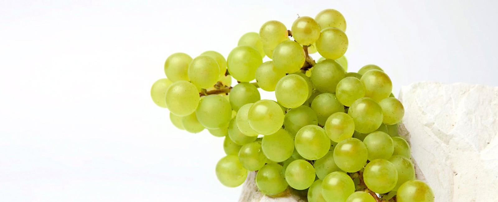 unwavering style grape