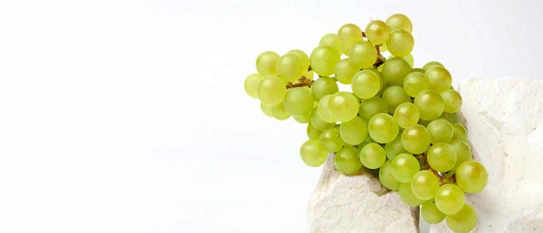 Los mejores Chardonnays de Côte des Blancs