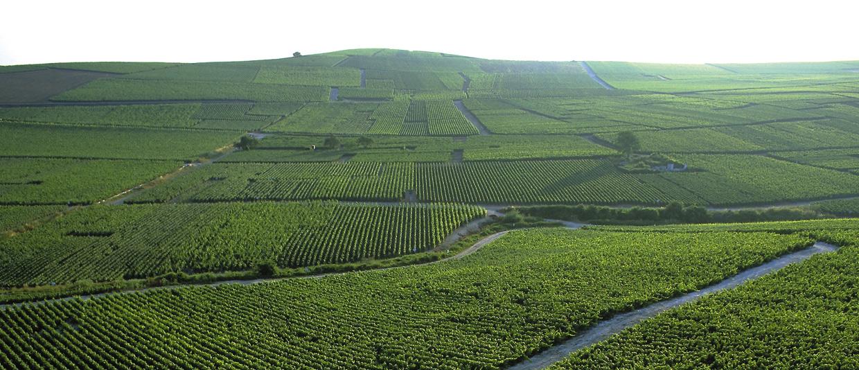 65 hectáreas que se han clasificado con un 99,2%