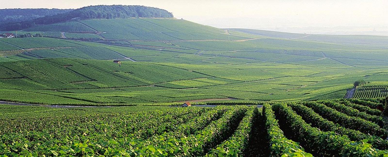 finest-vineyards